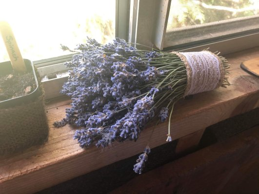 A bundle of dried lavender for scent and appearance.